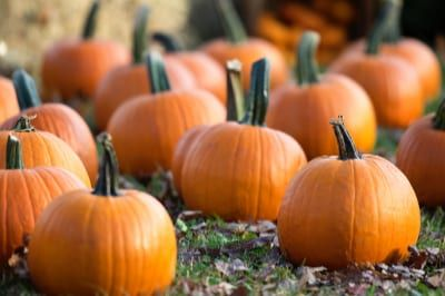 Find out how to grow giant and miniature Halloween pumpkins, try our top tips for pumpkin carving and discover delicious easy pumpkin recipe ideas to make.