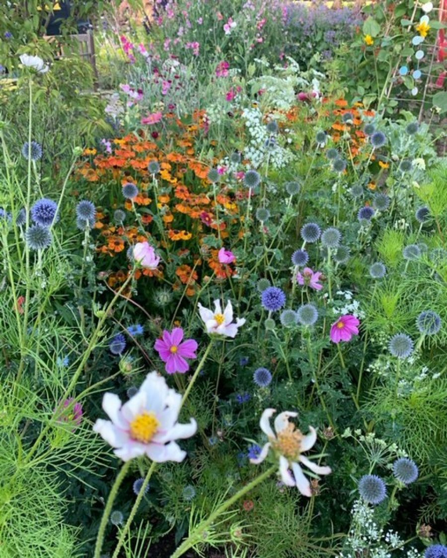flower beds at Chateau Greenslade - Gardener Blogs: Starting New Flower Beds